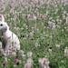 hd-konijnen-wallpaper-met-een-wit-konijn-tussen-de-bloemen-achter
