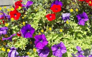 hd-rode-en-paarse-bloemen-achtergrond-bloem-wallpaper