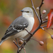 hd-vogel-wallpaper-met-een-grijze-vogel-op-een-tak-achtergrond-fo