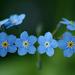 hd-blauwe-bloemen-achtergrond-met-bloemen-in-een-krans-wallpaper