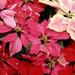hd-bloemen-wallpaper-met-rode-planten-achtergrond-foto