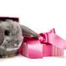 hd-konijnen-wallpaper-met-een-konijn-in-een-roze-doos-hd-konijnen