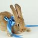 hd-konijnen-wallpaper-met-een-konijn-met-blauw-strikje-achtergron