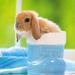 hd-konijnen-wallpaper-met-een-lief-klein-konijntje-in-een-laars-a