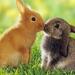 hd-konijnen-wallpaper-met-twee-schattige-konijnen-achtergrond-fot