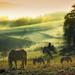 hd-landschap-achtergrond-met-paarden-in-het-weiland-paarden-wallp