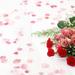 hd-rozen-wallpaper-met-rode-en-roze-rozen-op-een-witte-achtergron