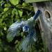 hd-vogels-wallpaper-een-vogel-vliegt-uit-een-vogelhokje-achtergro
