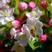 hd-bloemen-wallpapers-gekleurde-bloemen-hd-achtergronden