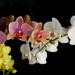 hd-gekleurde-bloemen-wallpaper-met-zwarte-achtergrond