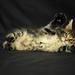 hd-katten-wallpaper-met-een-kat-die-ligt-en-een-zwarte-achtergron