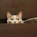 hd-katten-wallpapers-een-kat-in-een-lade-van-een-kast-hd-achtergr