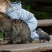 hd-kinderen-wallpaper-met-een-kind-en-een-kat-achtergrond