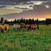 hd-paarden-achtergrond-met-een-groep-paarden-in-het-weiland-hd-wa