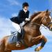 hd-paarden-wallpaper-met-een-springruiter-met-haar-paard-hd-paard