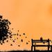 hd-wallpapers-oranje-achtergronden-met-een-boom-en-een-bankje-hd-
