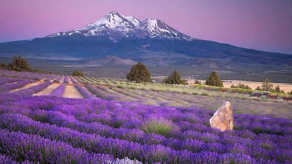 hd-achtergrond-landschap-met-paarse-bloemen-en-een-berg-hd-wallpa