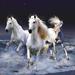 hd-achtergrond-met-drie-witte-paarden-in-de-zee-hd-wallpaper