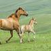 hd-achtergrond-met-een-bruin-paard-met-een-veulen-in-het-weiland-