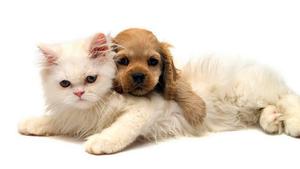 witte-achtergrond-met-een-hond-en-kat-die-lekker-tegen-elkaar-aan