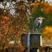 autumn-2930228_960_720