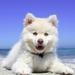 beach-1790049_960_720