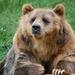 bear-2546092_960_720