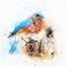 bird-2424083_960_720