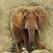 elephant-2541907_960_720