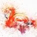 flamingo-2548748_960_720