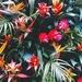 flowers-2932298_960_720