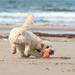 beach-2778535_960_720