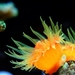 coral-2659616_960_720