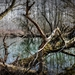 forest-835166_960_720