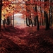 forest-1345719_960_720