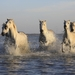 horses-1401707_960_720