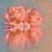 roses-2707680_960_720