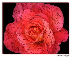 bewerkte-roos