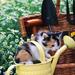hd-katten-achtergrond-met-een-jong-katje-in-een-bloemengieter-hd-