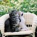 hd-katten-wallpaper-met-twee-katten-op-een-stoel-met-bloemen-op-d