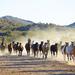 hd-paarden-achtergrond-met-een-groep-paarden-wallpaper-foto