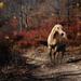 hd-paarden-wallpaper-met-een-paard-op-een-bospad-met-op-de-achter