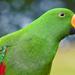 hd-vogel-wallpaper-met-een-groene-papegaai-hd-papegaaien-achtergr
