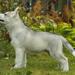 hd-wallpaper-met-een-witte-hond-op-het-gras-hd-honden-achtergrond