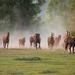 hd-achtergrond-met-een-groep-hard-rennende-paarden-wallpaper-foto