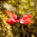anemone-2378294_960_720