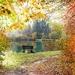 autumn-986350_960_720