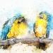 bird-2357213_960_720