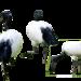 birds-2646878_960_720
