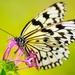 butterfly-2046454_960_720